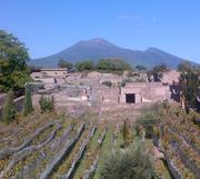 Grapevines of Pompeii with Mt Vesuviusavi col Vesuvio