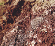 Detail of the lava from Vesuvius with its lichens